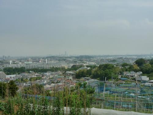 円海山から眺める横浜ランドマーク方面