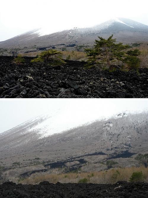 焼走り熔岩流(やけはしり・ようがんりゅう)の自然観察路から見た岩手山。<br /><br />あいにくの天気で全容は見えませんでしたが、岩手山は標高2038m。<br />コニーデ型火山で、那須火山帯に属する休火山。<br /><br />1732年(享保17年)の噴火の際、北東の山腹(1200m)から山麓(550m)にかけて流れ出た溶岩の跡が、黒い筋になってくっきり。<br /><br />下段の画像右上の方には、その噴出孔らしき山肌の盛り上がりが二つ見えています。<br /><br />この黒い岩の正体は、≪含かんらん石紫蘇輝石普通輝石安山岩≫と言うんだそう。<br />長い名前だ。ε-(゚д゚`;)フゥ...<br /><br />この溶岩は粘性が小さいため、上記の噴火の際には走るように速くこの斜面を流れ下り、それを見た人々が≪焼走り≫と呼んだことから、現在の≪焼走り熔岩流≫の名の由来にもなったのだそうです。<br />