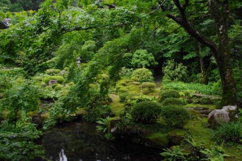 客殿より深緑の池泉回遊式庭園を眺める