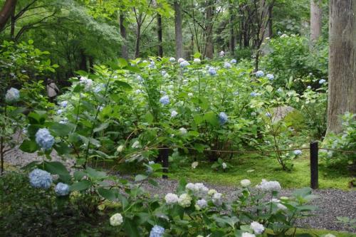 紫陽花苑へ