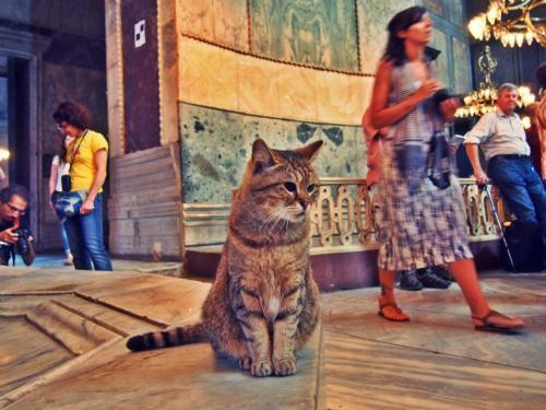 アヤソフィアの中にも猫が <br />