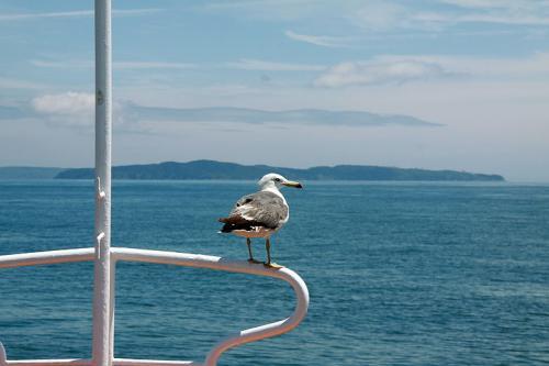 べた凪の海をゆっくりした足どりで船が進みます。<br />客貨船で後部デッキには車が搭載出来るようになってます。<br /><br />石巻港を出てしばらくすると田代島が見えてきて写真を撮ろうとデッキに出たら船首の手すりにカモメがやって来ました。