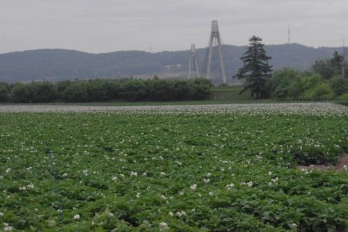 日本一の生産を誇る<br />十勝平野のジャガイモ畑