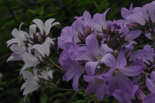 ガーデン内には<br />2006年から二年の歳月を掛けて植栽された花々が<br />365品種約2万株あるそうです。