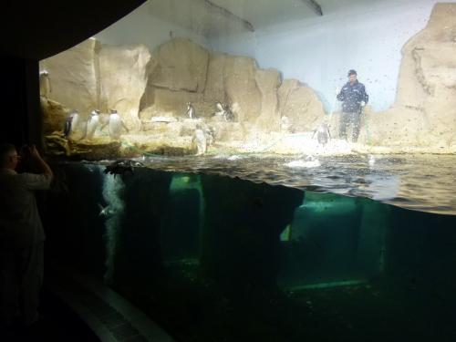 優雅な夏バカンス イタリア・東リビエラの旅♪ Vol19(第3日目午前) ☆ジェノバ:ヨーロッパ最大の水族館「Acquario」♪賑やかなペンギン♪懐かしのエオリエ諸島の魚たち♪クラゲはやっぱり癒される♪