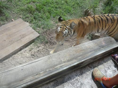 「マハラジャ・ジャングル・トレック」<br />こちらは歩いて、トラ/コウモリ等を観察