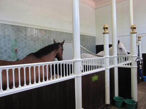 馬もいました。<br /><br />藁とか干し草のようなにおいがしました。まったく臭くありません!<br /><br />柵の外には馬のネームプレートがかかっていました。