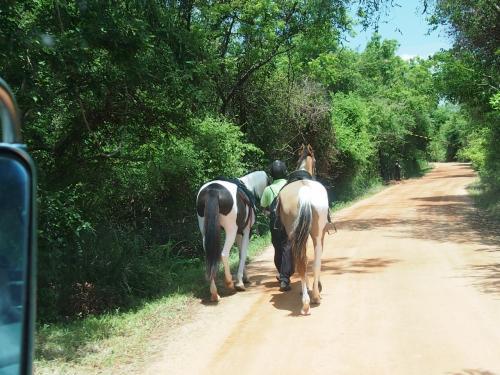 そうこうしていると、馬があるいていたり、道端に牛がいたり。
