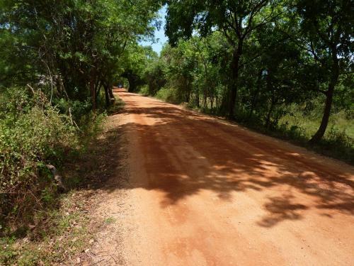 畑がなくなり森の中にくると舗装もされていない赤土が続く一本道。