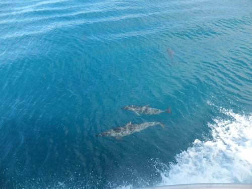 <br /> 8/15の朝・・・・・<br /><br /> ボートに乗っていました。<br /><br /> イルカが・・・・・<br /><br /> ボートと一緒に遊んでました。<br /><br /><br /> ちょっと・・・かなり二日酔い・・・