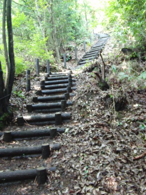 関和彦著「古代出雲への旅」(中公新書)によれば、「小道からわずかに登れば…」とあったのに、この階段である!<br /><br />昨日の佐太神社「母儀人基社(はぎのひともとしゃ)」よりも、もっとたくさんの、山道に作られた階段を登って行くと。。。