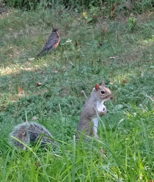 セントラルパークのリス<br /><br />セントラルパークだけじゃなく,ニューヨークのちょっとした公園には普通にリスがチョロチョロしていて,「なんか,食べ物ちょうだい」って顔して近寄ってくるのがカワイイ