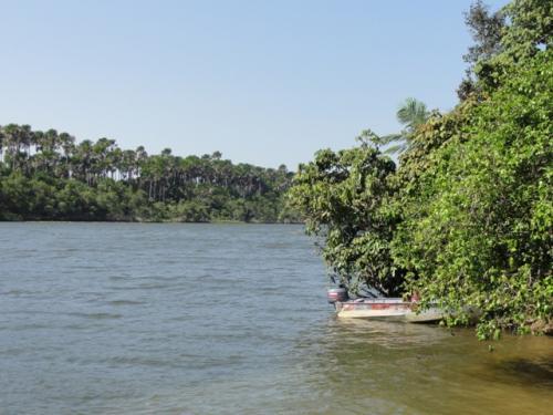 河畔にマングローブ。<br /><br />その奥にはヤシの木が高く立っています。<br /><br />熱帯の風景だよなぁ。