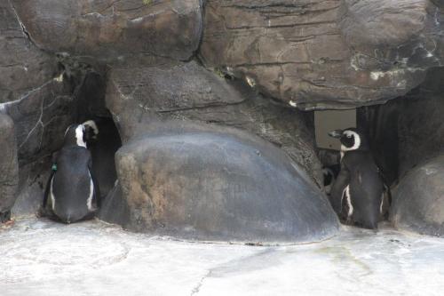 Hilton Hawaiian Village<br /><br />ペンギンさんも健在だ