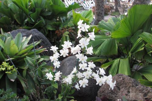 ハワイの花はさりげなく美しい