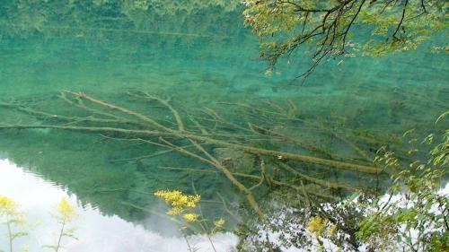 倒木は石灰により腐らなず透明度で見えて、これぞ九寨溝って感じ。