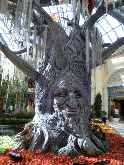 この木の顔、目が動くんですよね