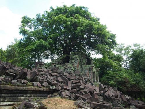 最後は一番彼が勧めた「ラピュタっぽい」っていう場所で記念撮影してお別れ。<br />たしかに遺跡の頭に大樹が生えてラピュタっぽいです。