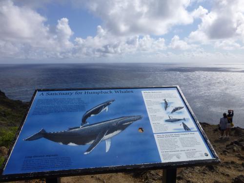 こちらクジラの見えるポイントです。<br />クジラらしい影が見えたのですが・・・