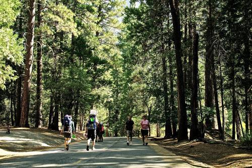 ヨセミテ国立公園は自然に溢れているし、ツアーの観光客もほとんどいなくて、自分たちの時間をゆっくり過ごせておすすめ!
