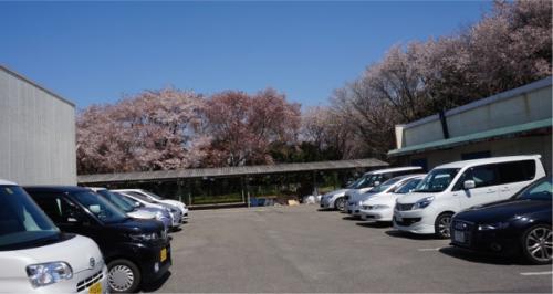 2012年にも山桜のお花見に来ています。<br />その時、「磯部桜川公園」の山桜は満開でした。<br />その雅な美しさを見て、すっかり山桜の魅力にはまった感じですが、<br />公園の駐車場がめちゃくちゃ狭く、みんな路上駐車だったので、今回もそれが心配でした。<br />ですが、行ってみると、手前の道から誘導され、臨時駐車場が用意されていました。<br />岩瀬東中学校の校庭です。<br />