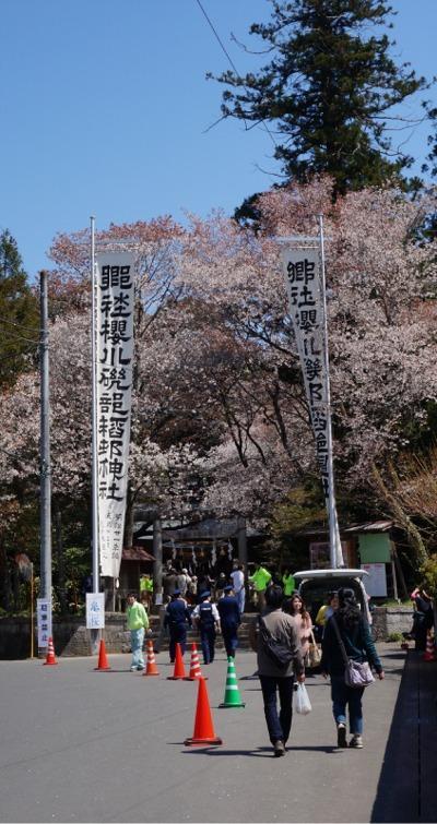 大きなのぼりが鳥居の脇にありますので、公園からもすぐに見える場所です。<br />この神社には天然記念物種など希少な山桜があります。<br />2012年4月15日の旅行記 こちらに桜川の山桜を記載しています。<br />桜川の山桜と笠間の桜めぐり<br />http://4travel.jp/travelogue/10662470<br />