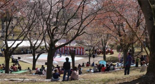 今日は、「磯部桜川公園」も桜まつり。<br />ステージではカラオケやダンスなどが披露されています。<br />公園の山桜は、ピークは過ぎてしまった様子。<br />