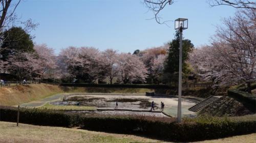 ピークは過ぎた頃だったので、散った花びらで 池の水面がピンクに染まっていましたよ。<br /><br />今年は一気に天気の良い日が続いたからか、ソメイヨシノに続いて咲いた山桜は早かったみたい。