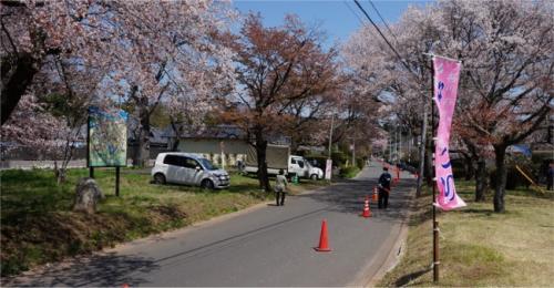おととしは片側が路上駐車の車で埋め尽くされていた道ですが、<br />今年は臨時駐車場が用意され、ここは駐車禁止に。<br />規制もあり、一方通行になっていました。<br /><br />しかし、この臨時駐車場情報、桜川市の観光サイトにも「桜川のさくら」を紹介しているサクラサク里プロジェクトのサイトにも案内が無かったなぁ。<br />ちゃんとPRすればいいのに。<br /><br />公園と神社の山桜はほぼ楽しみ尽くしたので、<br />今度は車で移動、<br />高峰に自生している山桜の景色を見に行きます。<br />