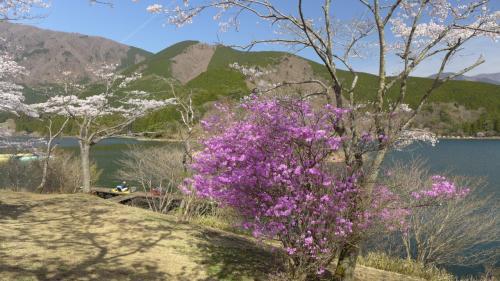 スタート地点東側からの風景。キャンピング場横からだ。<br />ここの風景から素晴らしく、桜満開のこの日は多くのカメラマンも撮影に来ていた。