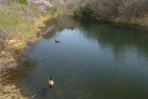 散策路に従って歩き、湖畔約1/4行くとこんな風景に出会える。<br />オープンスペースの田貫湖でも、このような入り江を見ることができる。
