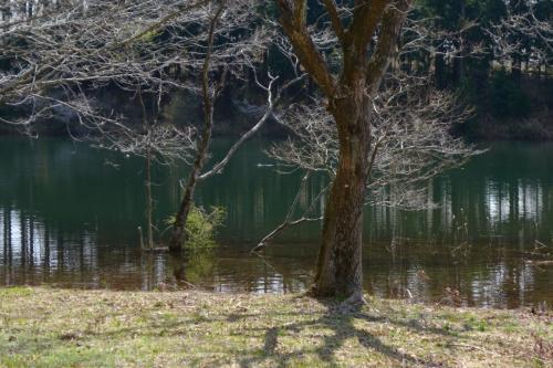 湖畔西側近くまで歩いた。<br />この日は湖面の水位が通常より50〜60cm高く、多くの木立が水面下から立っているようだった。<br />風景的にはとても良い雰囲気であった。