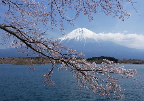 今日は、富士も桜も青空も丁度良かったなあ・・