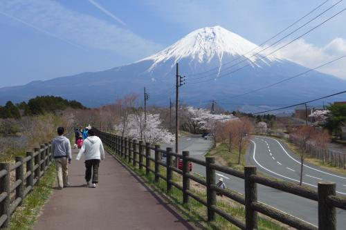 散策スタート直後。<br />富士を正面に見ながらの散策は楽しい。
