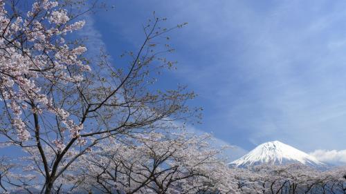 スタート地点からの富士。<br />いきなり絶景が待っていた。