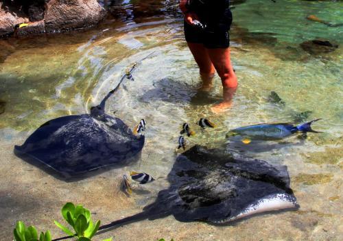 その物体とは、大きなエイ。<br /><br />飼育係のお姉さんが水の中に入ると、まるで寄り添うかのようにその足元にすり寄ってくる。<br /><br />カラフルな熱帯魚たちもいる。<br />
