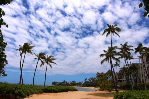 海岸沿いを少し、歩いてみる。<br /><br />日中は、ホテルゲストの多くは島中にアクティビティに出ているのか、ビーチにいる人の数は少ない。<br />