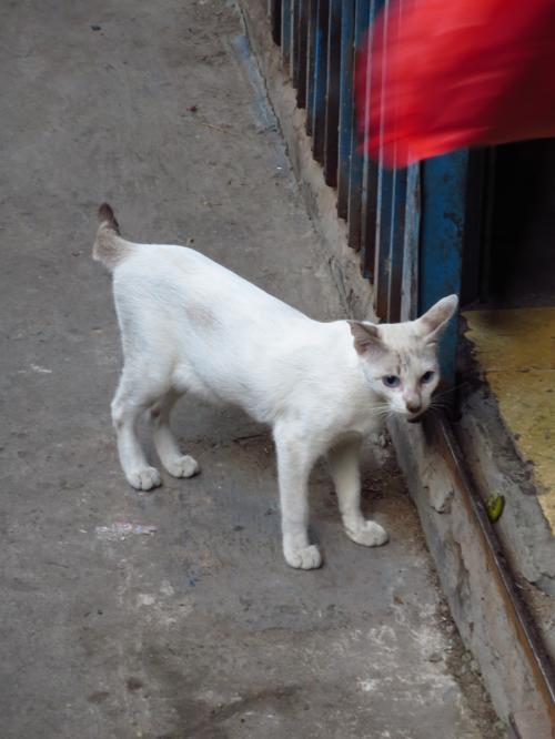 ホーチミンの猫ちゃん
