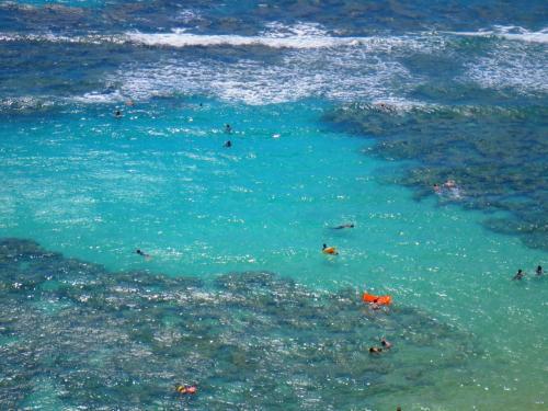 魚類の保護区となっているため、浅瀬でも色とりどりの熱帯の魚が足元を泳いでいるのを見ることができます。<br />上からでも魚が見えるときがあります。