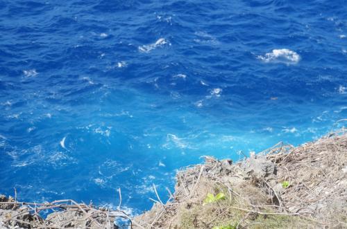 画像では分かりにくいですが、ウミガメの赤ちゃんがいました。<br />海の青さが本当にきれいです。
