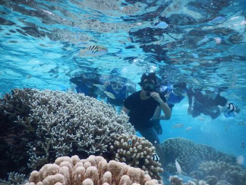 珊瑚がりっぱ!<br /><br />上の方に例のセナスジベラが!