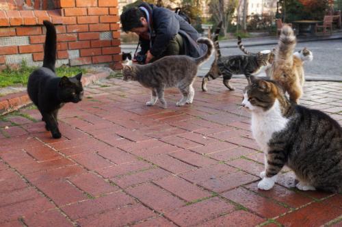 写真を撮っていたらネコたちが集まってきました。岩合さんのようにはうまく撮れません。