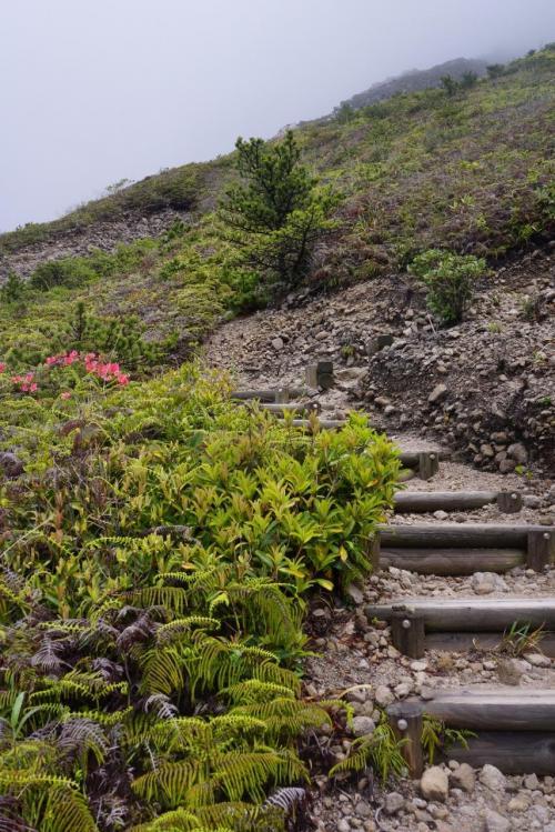 こんな感じで登りがずーっと続く。<br />背の高い植物がないので見通しはいいです。
