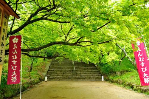 新緑が何とも美しい<br /><br />空気までもが、翡翠色に染まっている様に見えます。<br /><br />生命の輝きが増す季節・・・<br /><br />この時 この季節の輝きですね。