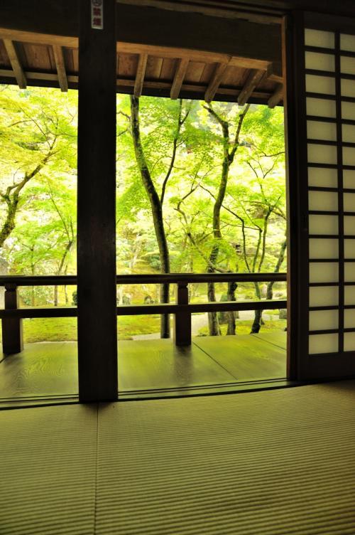"""""""光明禅寺""""<br /><br />床紅葉ならぬ 翡翠床です。<br /><br />廊下・室内の畳が、新緑の色に染まっています。<br /><br />なんとも まぁ〜〜〜(*'▽'*)わぁ♪"""
