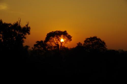 木の下にまた陽が見えてきました。