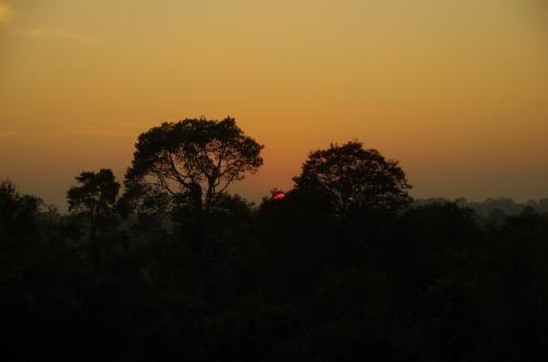 そして、ジャングルの中に太陽は消えて行きました。