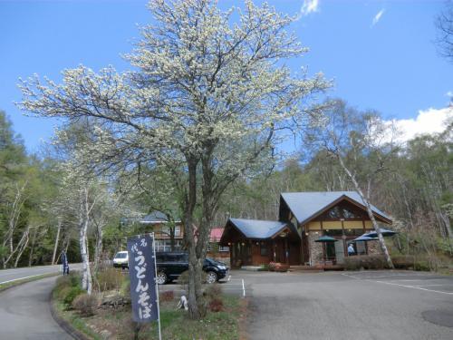 ランチにCafe&お食事「小梨の木の下」(写真)に行く。白樺湖から女神湖に抜ける幹線道路沿いにあるログハウス造りのお洒落なレストランである。ここは関西出身のオーナー夫婦による和食の店である。