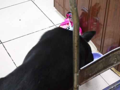 猫が飼われてるようでキャットフードが置いてあったのですが、<br />ワンコがやってきてキャットフードをつまみ食いしてました。