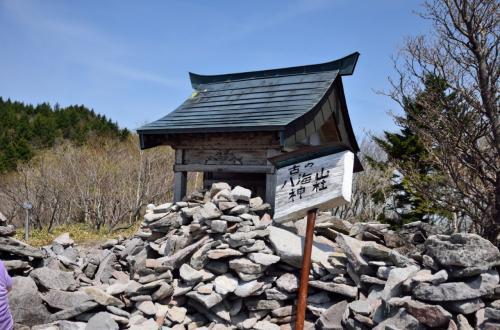 八梅山神社。神社といっても、小さな祠があるだけだ。昔はこのあたりも修験道が盛んだったようだ。<br />ここに、10:05着。ここで小休止<br /><br />ここから、林間コースを通って大間々台に下っても良かったのだが、ほとんどのハイカーが剣ヶ峰方面に向かっているので、我々も剣ヶ峰、大入道方面を歩いてみることにした。